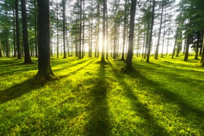 Naklejka słoneczny las