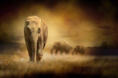Słonie podczas zachodu słońca