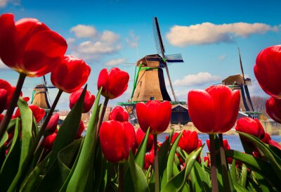 Naklejka Słynne holenderskie wiatraki