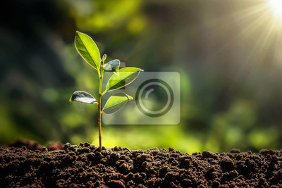 Naklejka small tree growing with sunshine in garden. eco concept