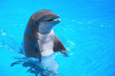 Naklejka Śmiejący SIĘ delfin w Loro Park NA Teneryfie
