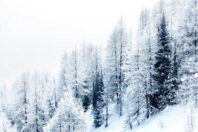Naklejka Śnieg pokryte lasu