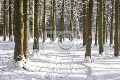 Śnieżna ścieżka w zima lesie na słonecznym dniu. Naturalna scena zimowego lasu. Natura krajobraz zima las z mroźnymi drzewami.