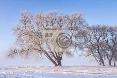 Śnieżni drzewa przy pogodnym zima dniem. Zimowy krajobraz. Mroźni drzewa w parku przeciw Jasnemu niebieskiemu niebu w słonecznym dniu. Zimowa sceneria.