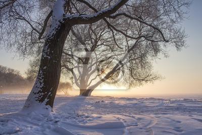 Śnieżny zima krajobraz przy zmierzchem. Zimna słoneczna scena natury. Bożenarodzeniowy naturalny tło. Mroźne drzewa w śniegu.