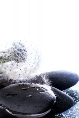 Naklejka Soffione con seme
