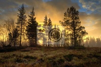 Sonnenaufgang im herbstlichen Nebel
