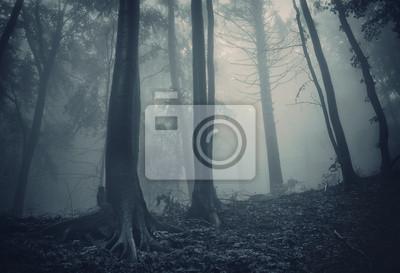 sosny w ciemnym lesie z zielonej mgle
