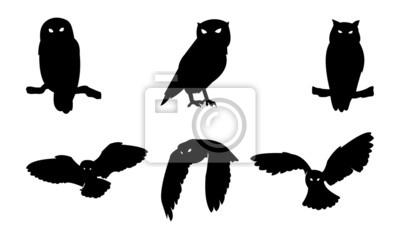 Naklejka Sowa sylwetka ptaka