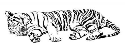 Naklejka Spanie Tiger.
