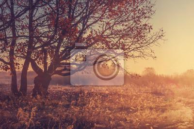 Spokojny żywy jesień krajobraz natura. Złote światło słoneczne w październiku rano. Kolorowy drzewo na trawiastej łące. Spadek. Czerwone liście spadają na ziemię. Spokojna jesień. Jesienne tło na wsch