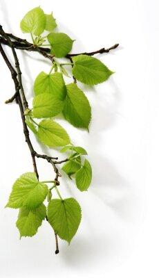 Spring Branch Art