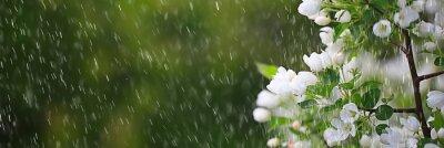 Naklejka spring flowers rain drops, abstract blurred background flowers fresh rain