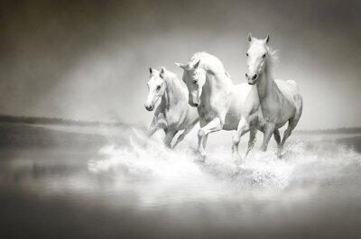 Stado białych koni z systemem za pośrednictwem wody