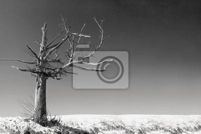 Naklejka Stara martwe drzewo w opustoszałym krajobrazie w czerni i bieli