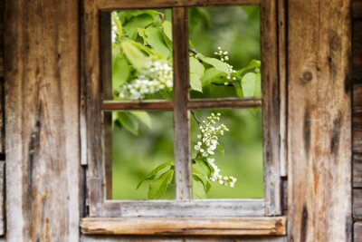 Naklejka Stare drewniane ramy okienne, wiosna, kwitnące drzewa.