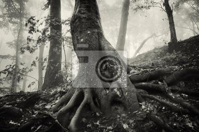 stare drzewo z ogromnymi korzeniami w upiorny las z ciemnej mgły