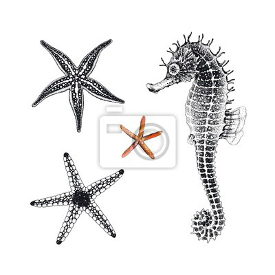 Starfishes and Seahorse hand drawn, vector illustration. Collection sea design elements, symbols marine decors.