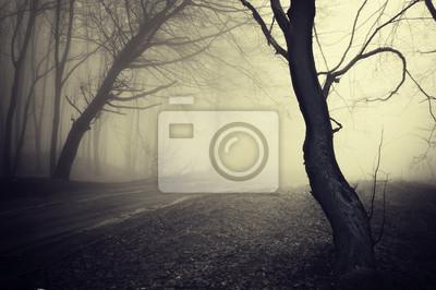 stary patrząc zdjęcie ścieżki przez las z mgły na rano