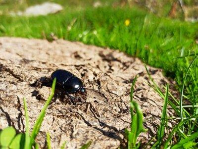 Naklejka state potato beetle