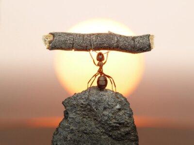 Naklejka Statua Pracy, 150 milionów lat cywilizacji mrówek