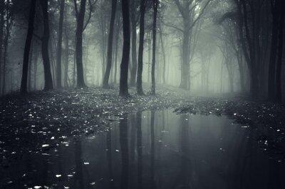 Staw w lesie z mgły