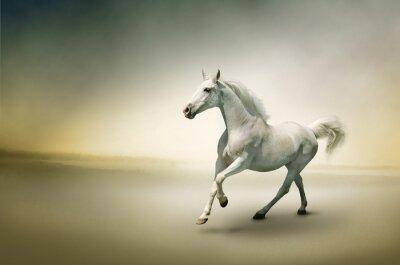 Stock Photo: Biały koń w ruchu