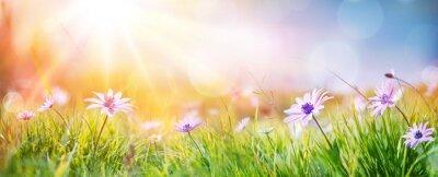 Naklejka Stokrotki Na Polu - Streszczenie Wiosny Krajobraz