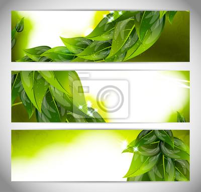 Streszczenie jasne transparenty z liści