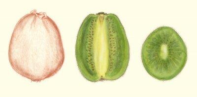 Naklejka Studi di Frutta: kiwi