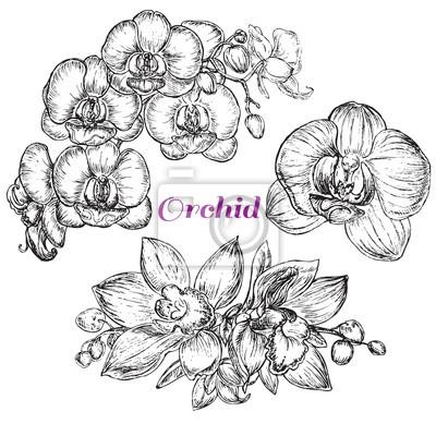 Naklejka styl szkic czarna orchidea