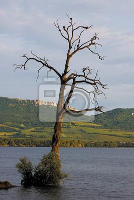 Suchej stare drzewa sam w środku jeziora