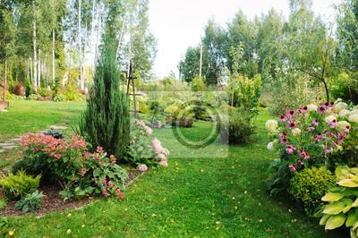 Naklejka summer garden view with blooming perennials, Hydrangea paniculata, conifers, hostas. Cottage garden style