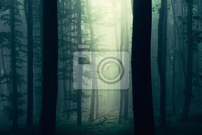 sun ray in dark fantasy forest, mysterious woods landscape