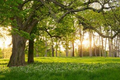 Naklejka Sunlight w zielonym lesie wiosną