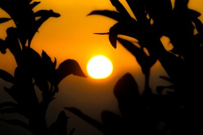 Sunset and tree leaves, tree branches