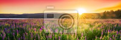 Naklejka Sunset over field with wild flowers