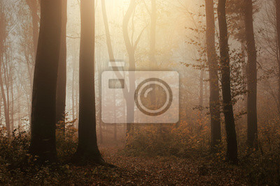 sunsshine in foggy woods, autumn forest landscape