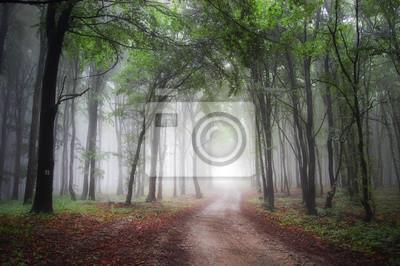 Światło na końcu drogi przez zielony las z mgły