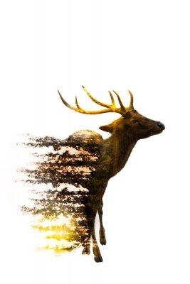 Naklejka Światowy dzień dzikiej przyrody Pojęcia dotyczące środowiska i dzikiej przyrody