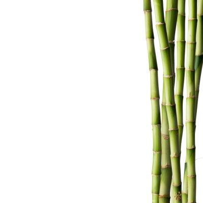 Naklejka Świeże bambusa z bambusa lasu w tle