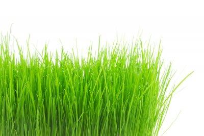 Naklejka Świeże zielona trawa