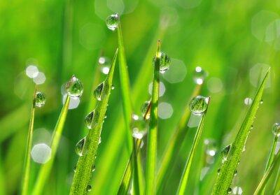 Naklejka Świeże zielona trawa z krople rosy z bliska. Rodzaj t