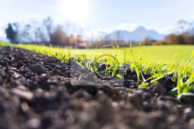 Naklejka Świeże, zielone i żyzne rośliny rolnicze, trawa