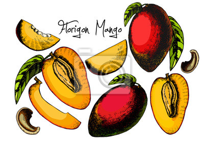 Świeży zestaw Mango samodzielnie na białym tle.