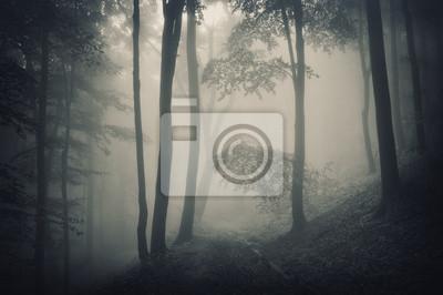 sylwetka drzew w lesie z mgły