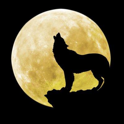Naklejka Sylwetka wilk przed księżycem