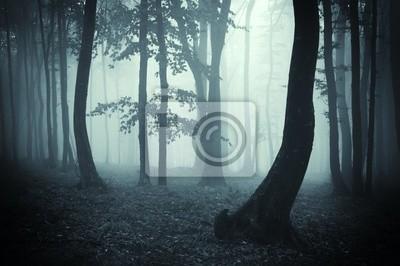 sylwetki drzew w ciemnym lesie