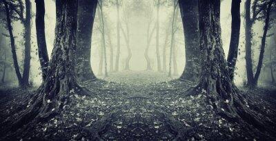 symetryczne zdjęcie tajne przejście w tajemniczej mgle lasu
