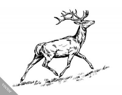 Naklejka Szczotka malarstwo tuszem wyciągnąć ilustracji wektorowych jelenia